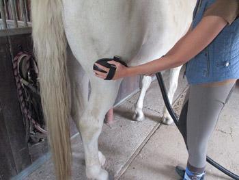 Pferdezubehör Set
